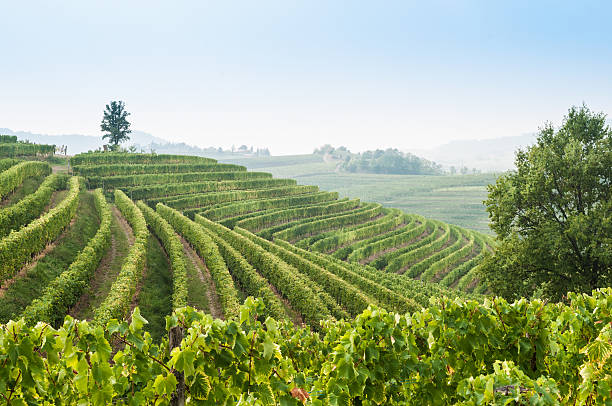 nice vineyard landscape at north of italy - udine stock-fotos und bilder
