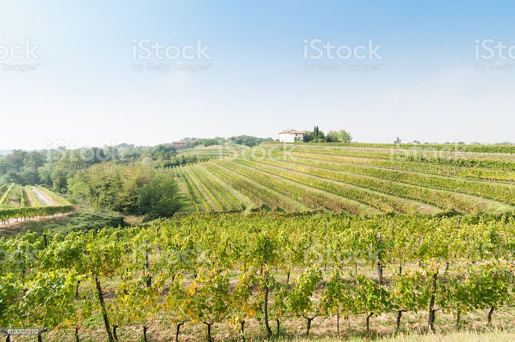 Nice vineyard landscape at north of Italy - Lizenzfrei Agrarland Stock-Foto