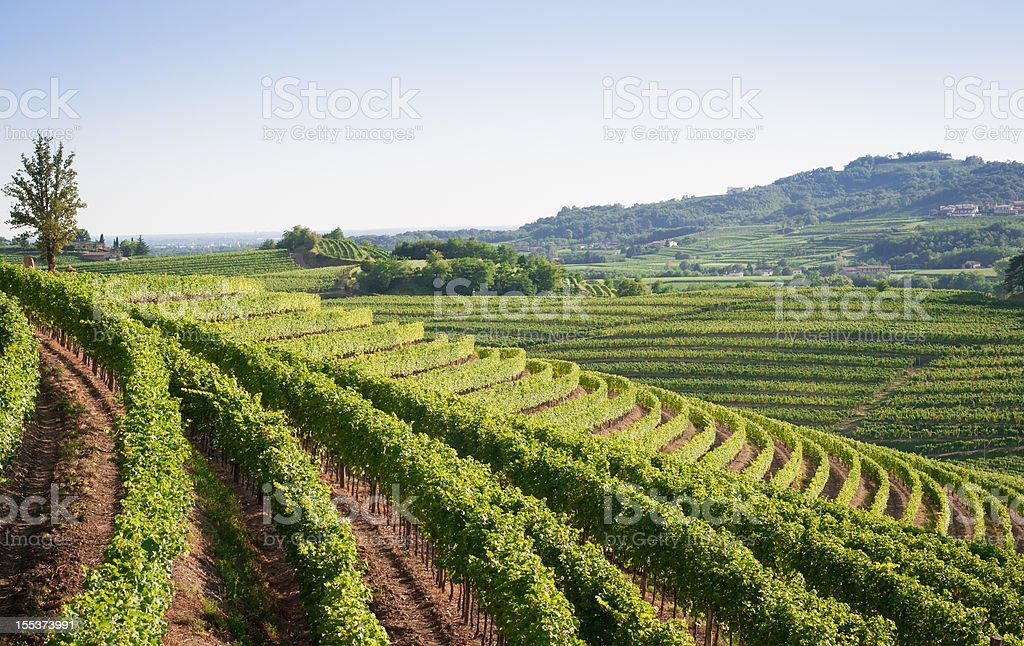 Nizza-Weinberg-Landschaft im Norden Italiens - Lizenzfrei Anhöhe Stock-Foto