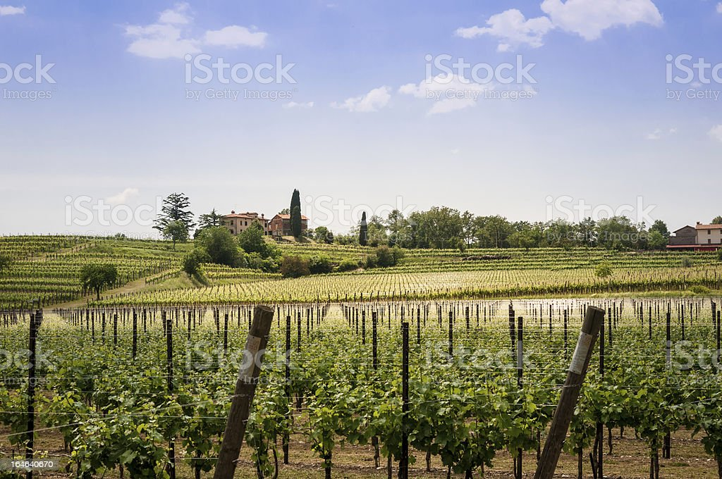 Nice vineyard landscape in north of Italy royalty-free stock photo