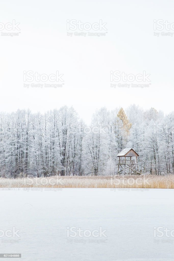 Nice winter day at lake after blizzard. Trees covered snow. foto stock royalty-free