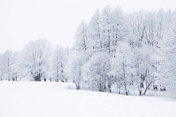 Nice winter day in the park after blizzard. Very beautiful. Nice winter day in the park after blizzard. Tree branches are snow covered and look very beautiful. fresh start morning stock pictures, royalty-free photos & images