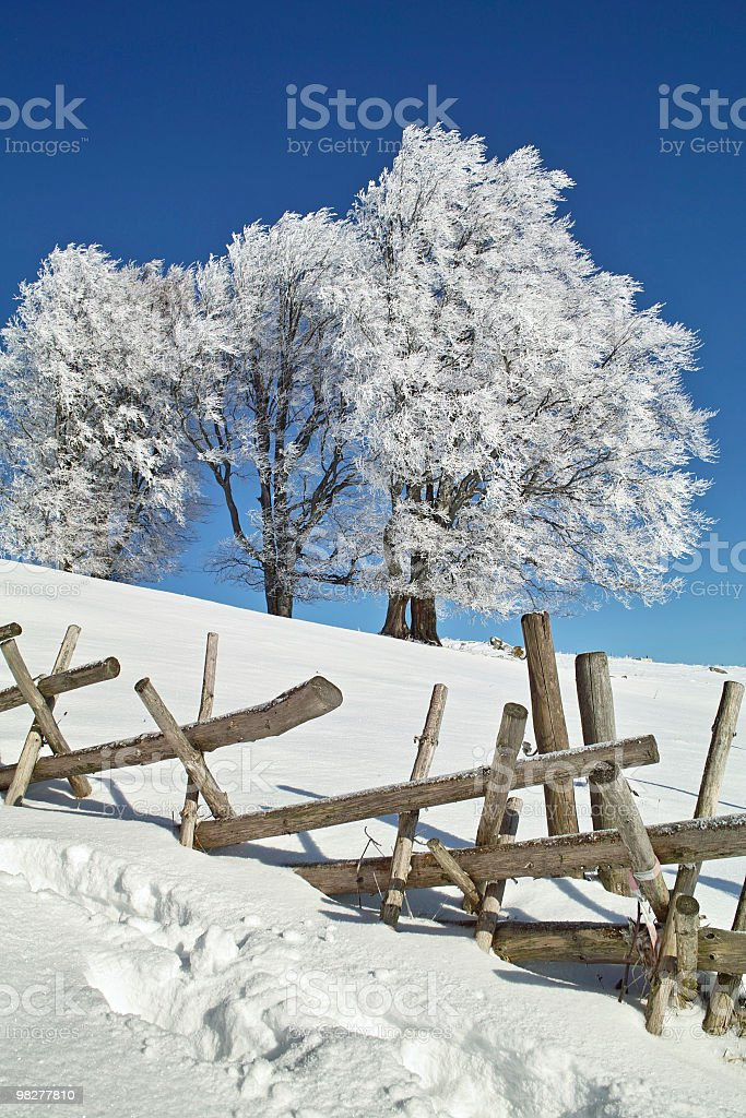 nice winterday with snowy trees and wodden fence royalty-free stock photo