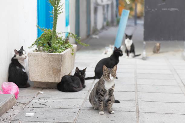 Nicosia Stadt Straße mit Herde von Katzen im Morgengrauen Zypern – Foto