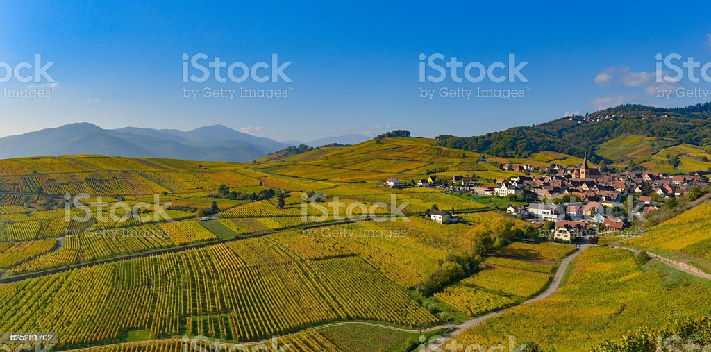 Niedermorschwih, Alsatian vineyards, Alsace, France, Europe, Autumn, Mountain, - foto stock