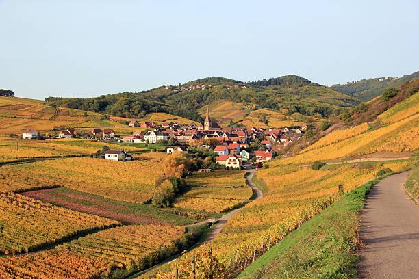 Niedermorschwihr e alsaziana vineyard - foto stock