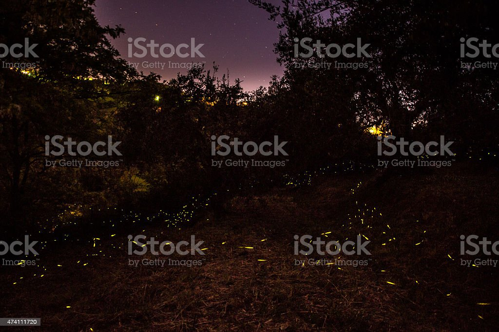 Night and fireflies stock photo