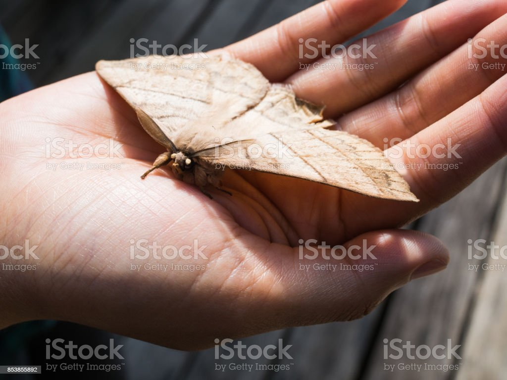 Night butterfly on hand stock photo