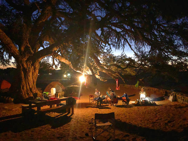 Night camping together under an ancient tree in the desert stock photo