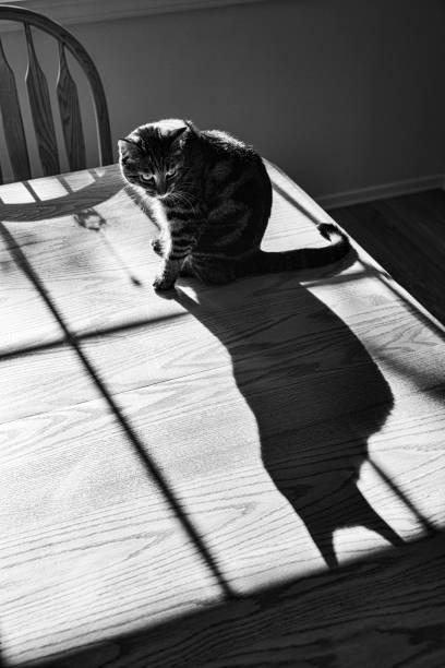Night cat silhouette throwing dark batman shadow picture id1168621397?b=1&k=6&m=1168621397&s=612x612&w=0&h=muv unoia lk acdzvzqvajcpl nerw6oywk9t6pp0u=
