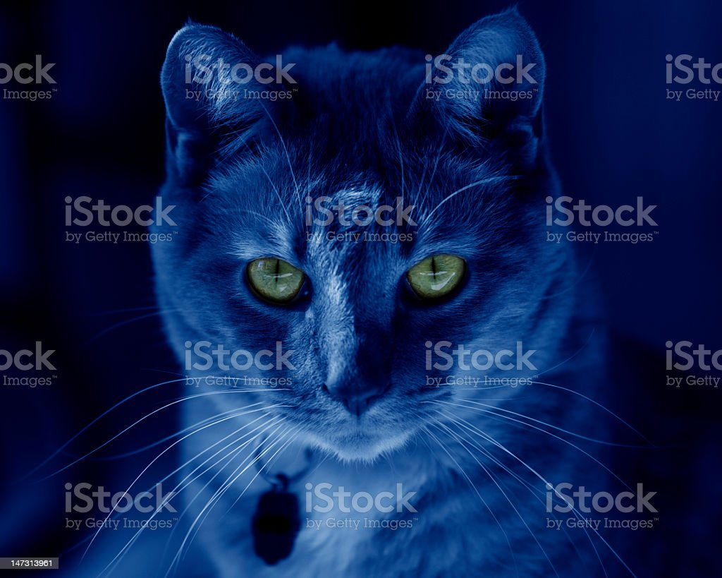 Night cat with glowing eyes stock photo