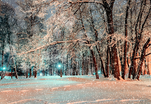 Night city winter park under winter snowfall covered with winter frost and snow -winter night park landscape view. Winter night snowfall in the deserted night winter park. Winter wonderland.