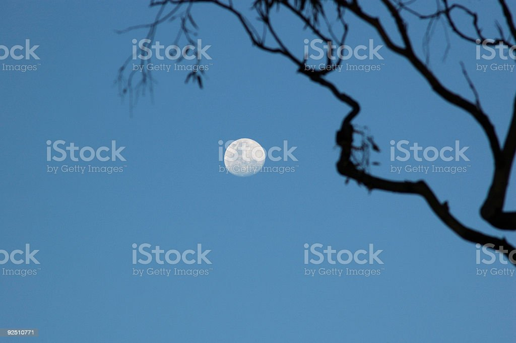 Night falls on the park royalty-free stock photo