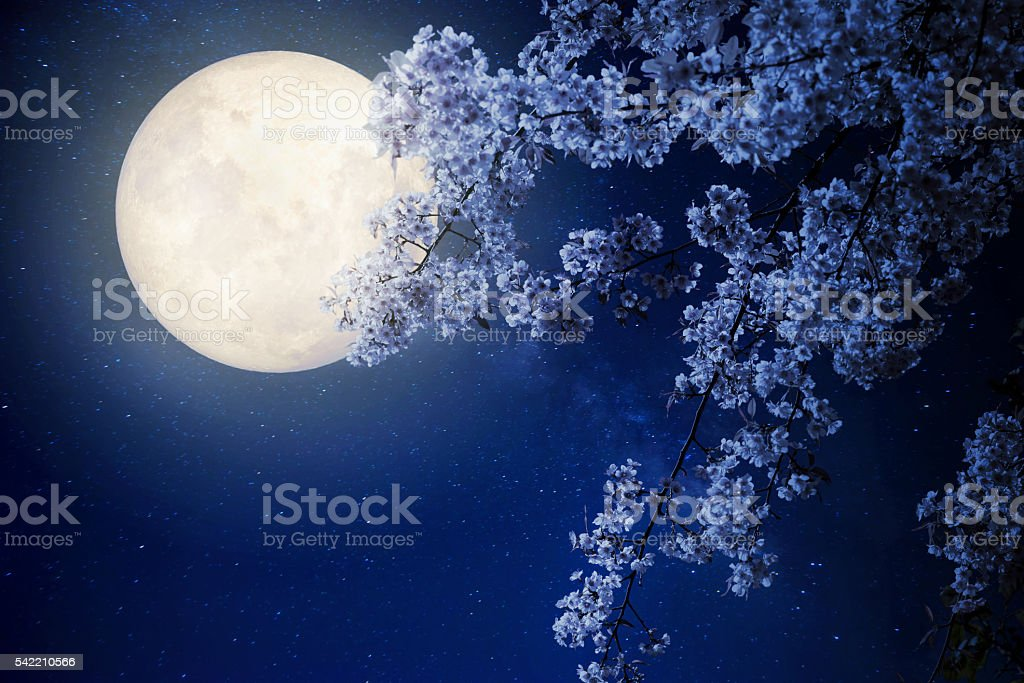 night flowers stock photo