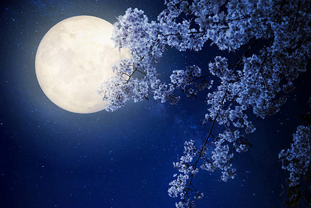 night flowers - romantic moon stock photos and pictures