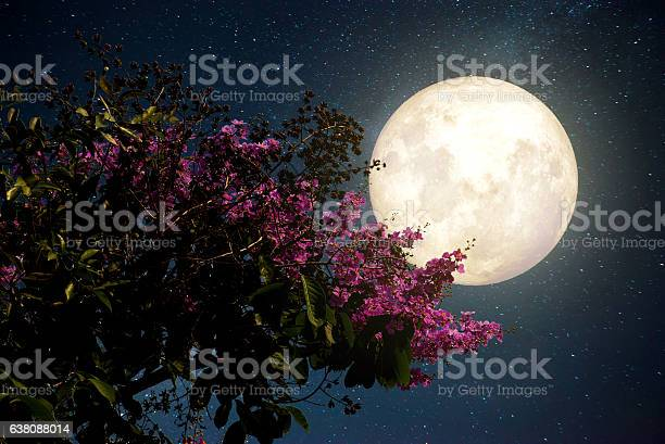 Photo of night flowers
