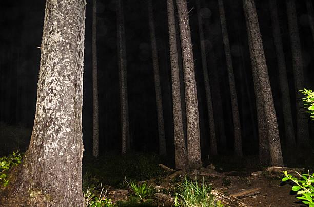 Night Forest near Scott Creek on the Olympic Coast stock photo