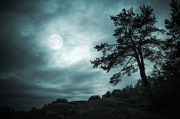night forest under sky with full moon - pleine lune photos et images de collection