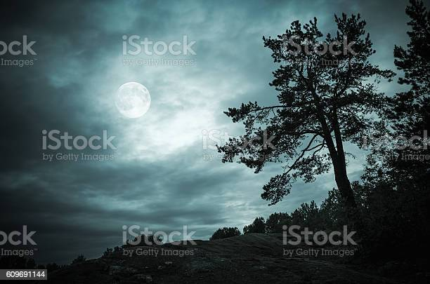 Photo of Night forest under sky with full moon