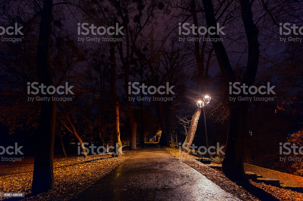 Night in a park stock photo