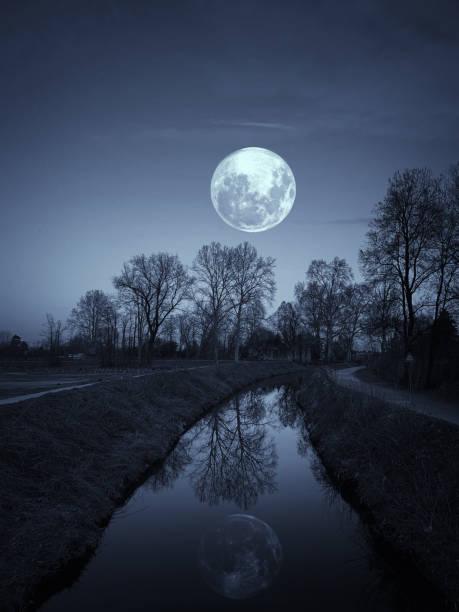nuit dans un parc avec la pleine lune - pleine lune photos et images de collection