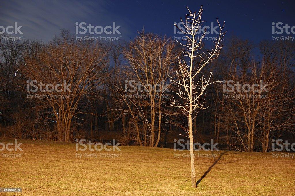 Night in the Park royaltyfri bildbanksbilder