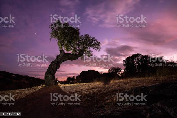 Photo of night landscape with holm oaks in the natural park of cornalvo. Extremadura, Spain