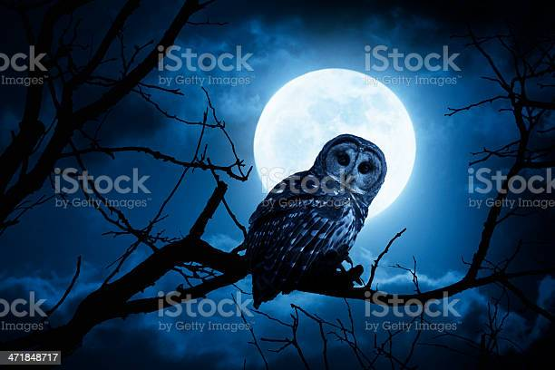 Night owl with bright full moon and clouds picture id471848717?b=1&k=6&m=471848717&s=612x612&h=2x2mci02egpeyiqwjrr8ln 23apzgfbsv3qd htfrnu=