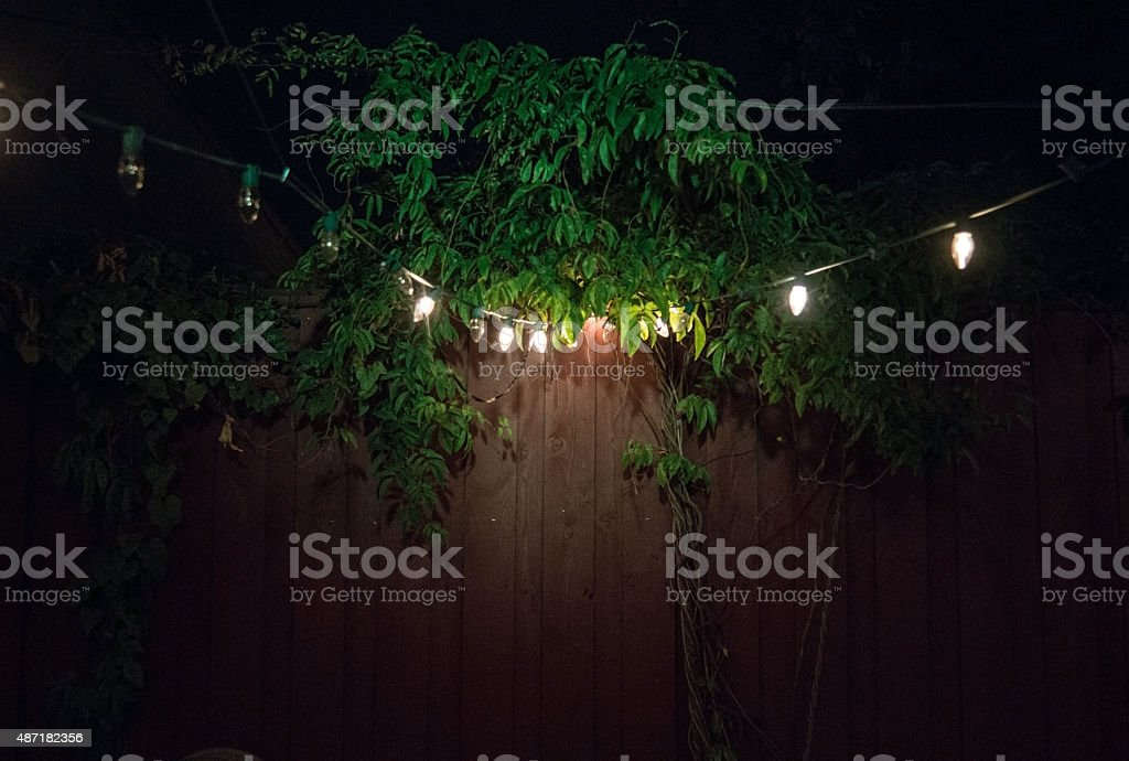 Night plants with lights and wood stock photo