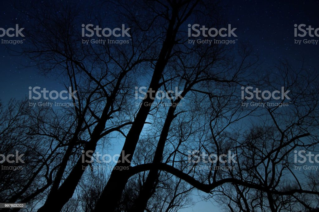 Night shot of a tree silhouette stock photo