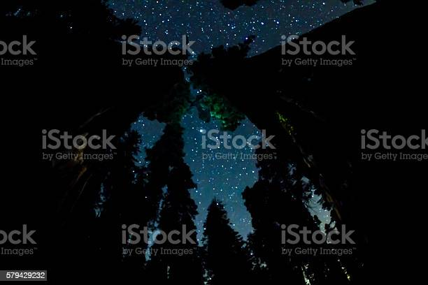 Photo of Night Sky above the big Sequoia trees