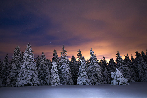 Snowcapped trees under the beautiful night sky.