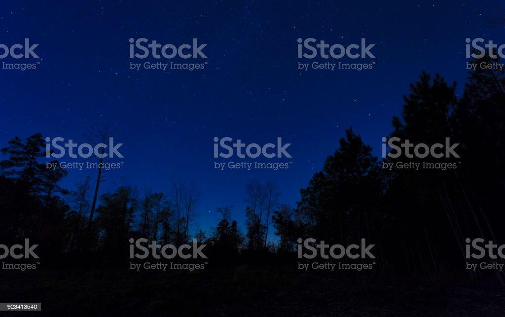Nachthimmel über einer Baumgrenze – Foto