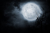 Night sky with full moon and old tree. On dark background