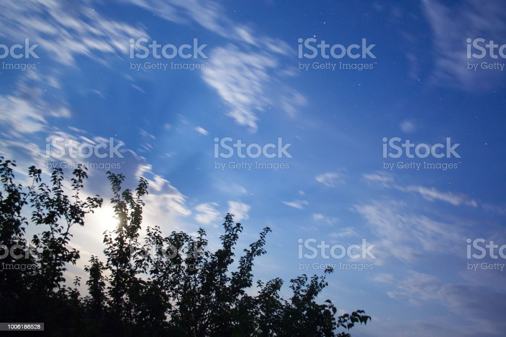 Night blue sky with moon and tree