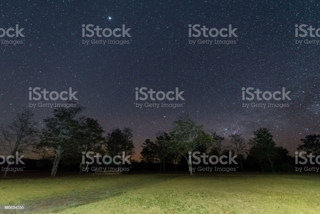 Night sky with star and tree. stock photo
