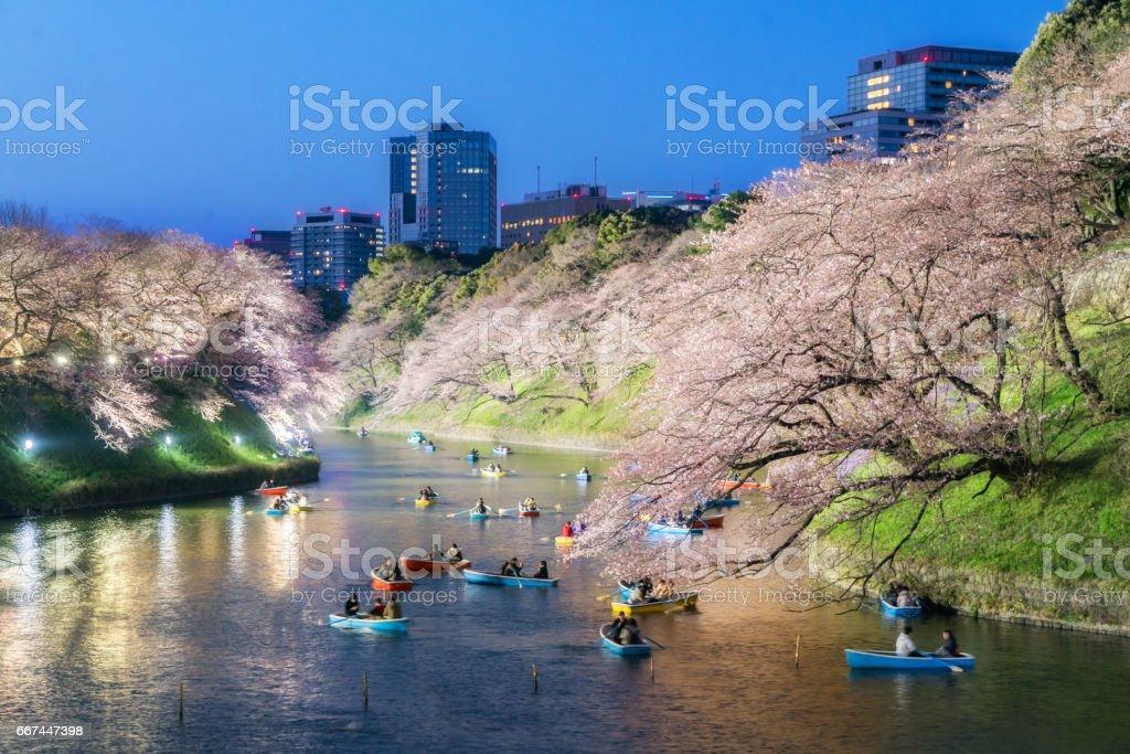 Night view of massive cherry blossoming in Tokyo, Japan as background. Photoed at Chidorigafuchi, Tokyo, Japan. stock photo