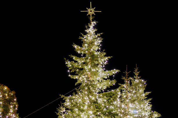 Night view of the main illuminated tree at the central city square. stock photo