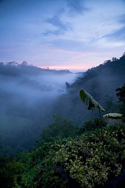 Nightfall in Ubud Bali stock photo
