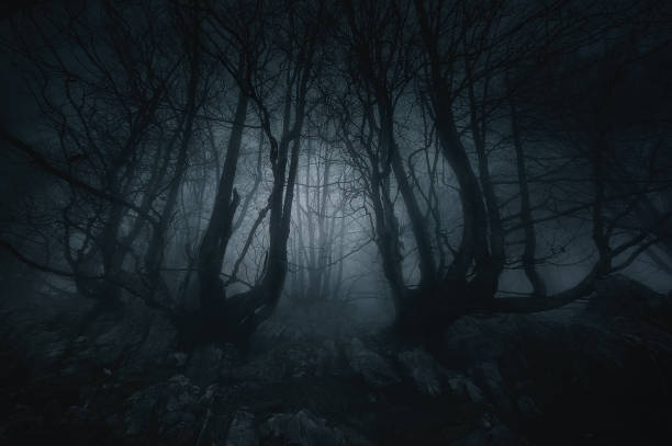 nightmare forest with creepy trees stock photo