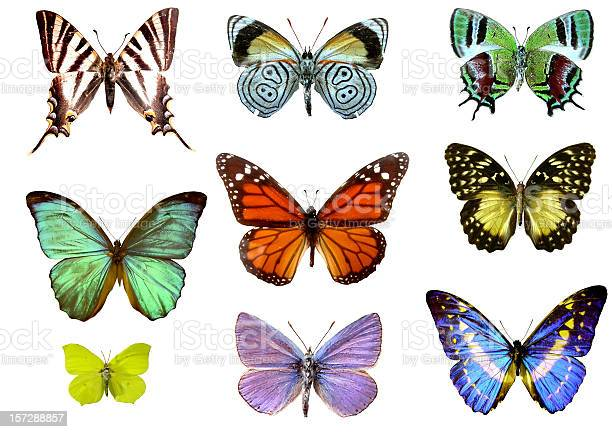 Nine colorful butterflies picture id157288857?b=1&k=6&m=157288857&s=612x612&h=tm8y7xfgwbdmqb0f7i wcfrdy ufn kb1m8tjpa ckw=