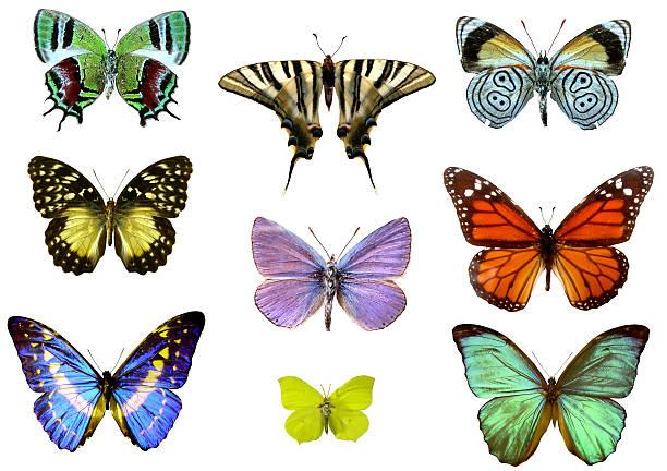 Nine colourful detailed butterflies on a white background picture id171208913?b=1&k=6&m=171208913&s=612x612&w=0&h=zdgpgfvnuozvgka66z7nlj7z0ysvjszmqraxuhxqmui=