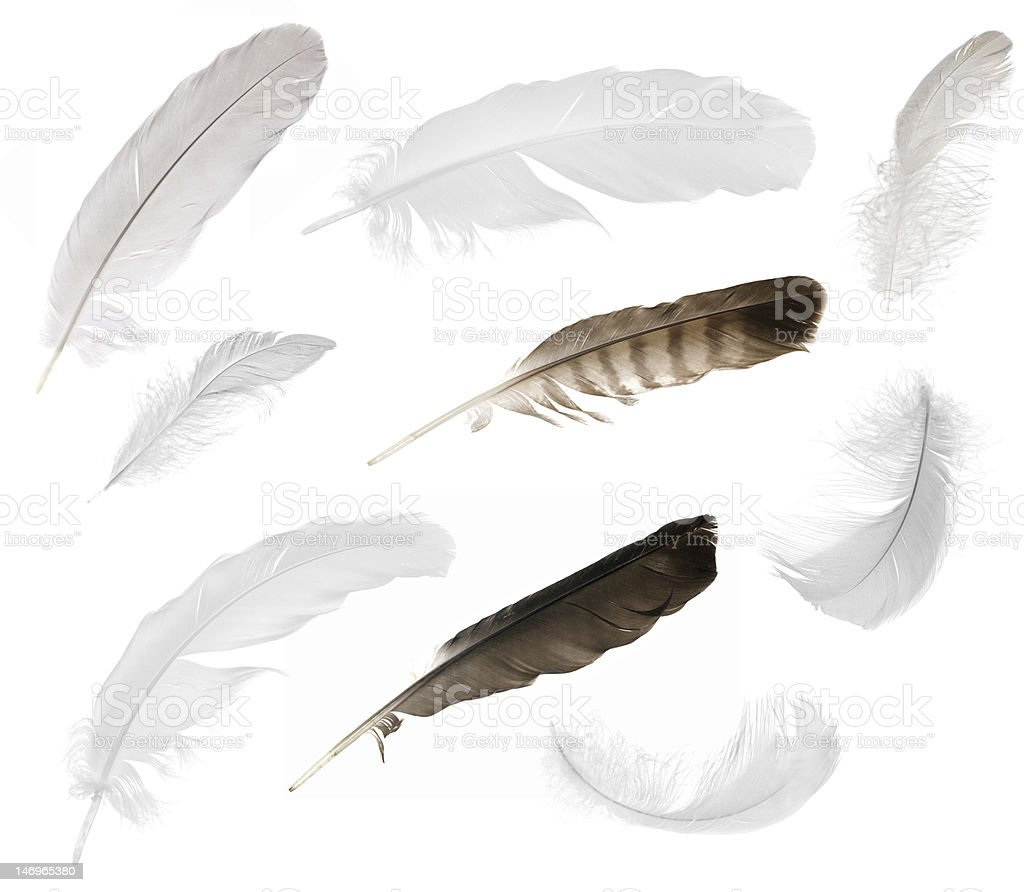 nine isolated feathers stock photo