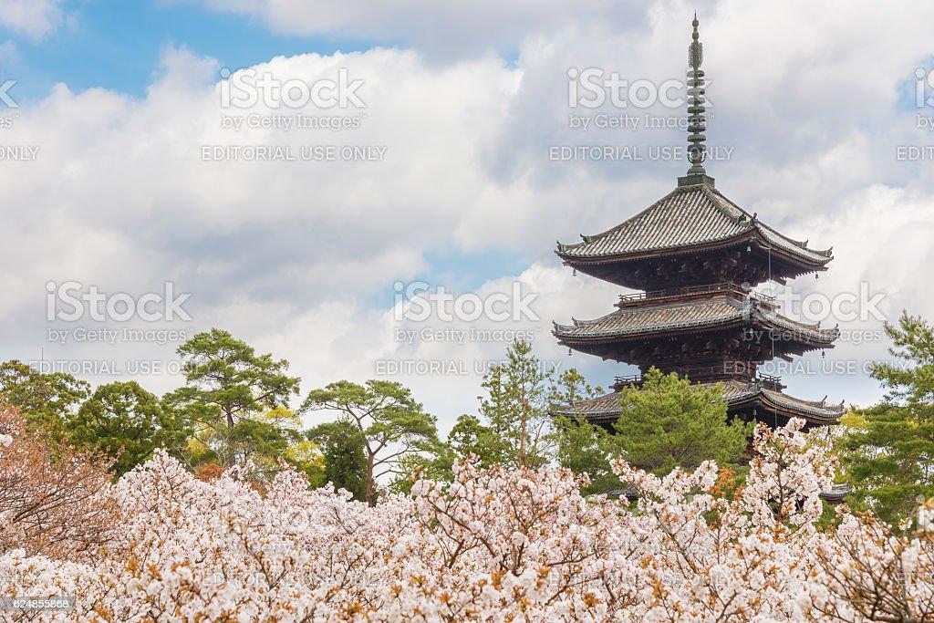 Ninna-ji temple, Kyoto, Japan – Foto