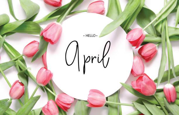 """ninscription hello april. tulpenblume. frühlingshintergrund. - blütenstand stock-fotos und bilder"