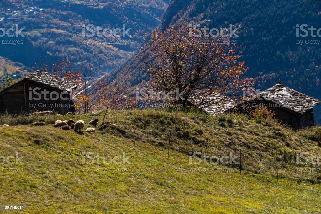 niwarch,ausserberg,valais,swiss royalty-free stock photo
