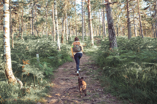 Rear view of an unrecognizable woman exploring the woods along with her dog companion. They're following the path into the deep forest.