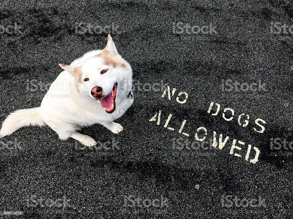 No dogs allowed royalty-free stock photo