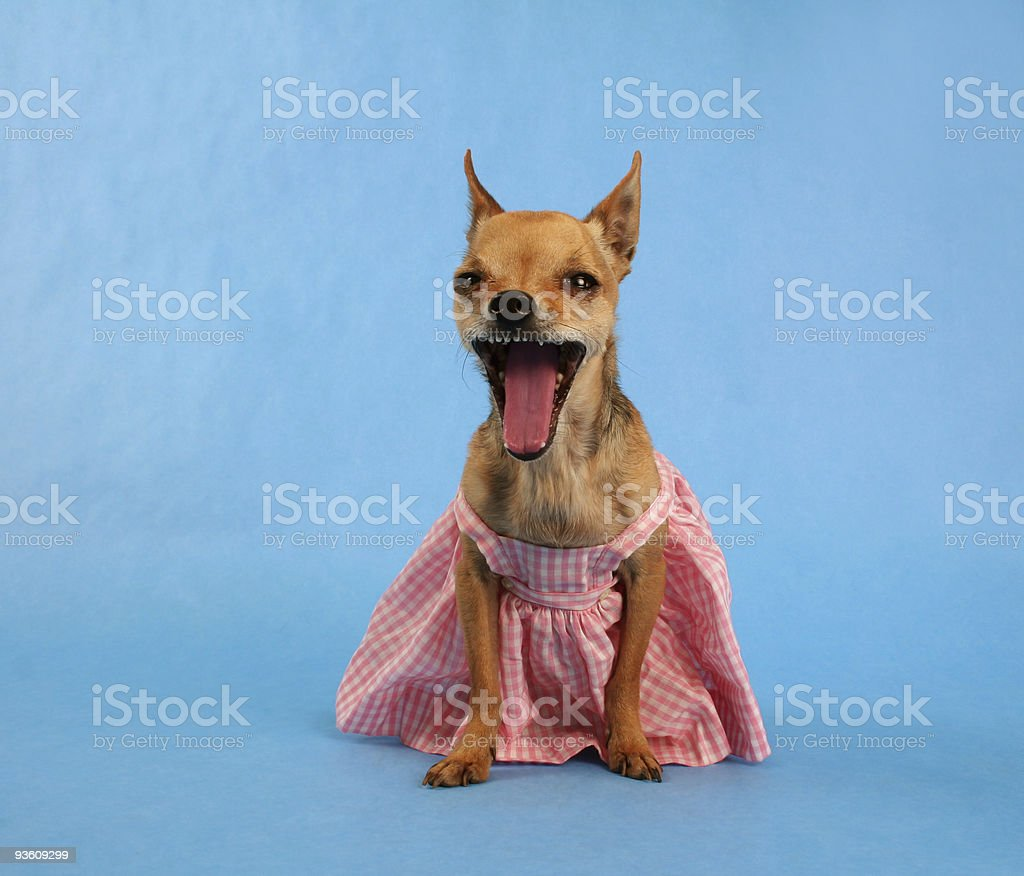 no dresses! royalty-free stock photo
