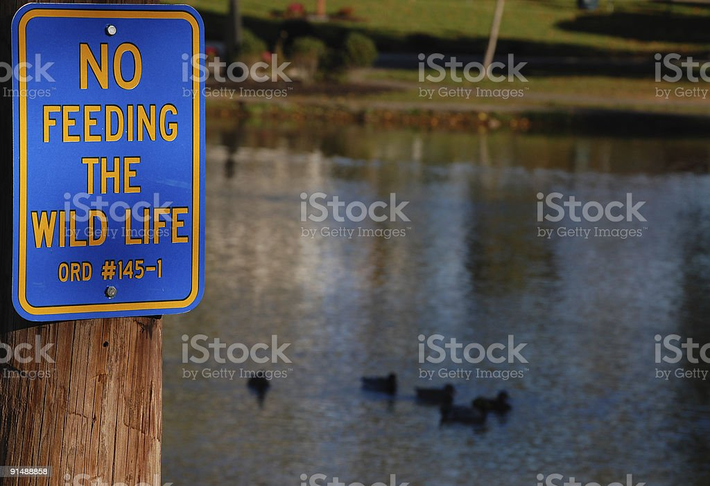 No Feeding The Wild Life stock photo